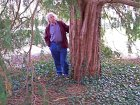 Yew tree and me.jpg